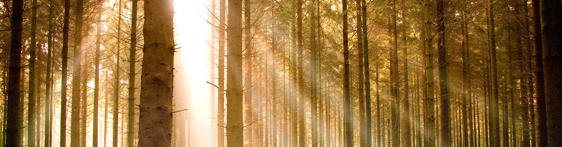 Diagnostic arboricole – vous avez jusqu'au 31 juillet 2018 !