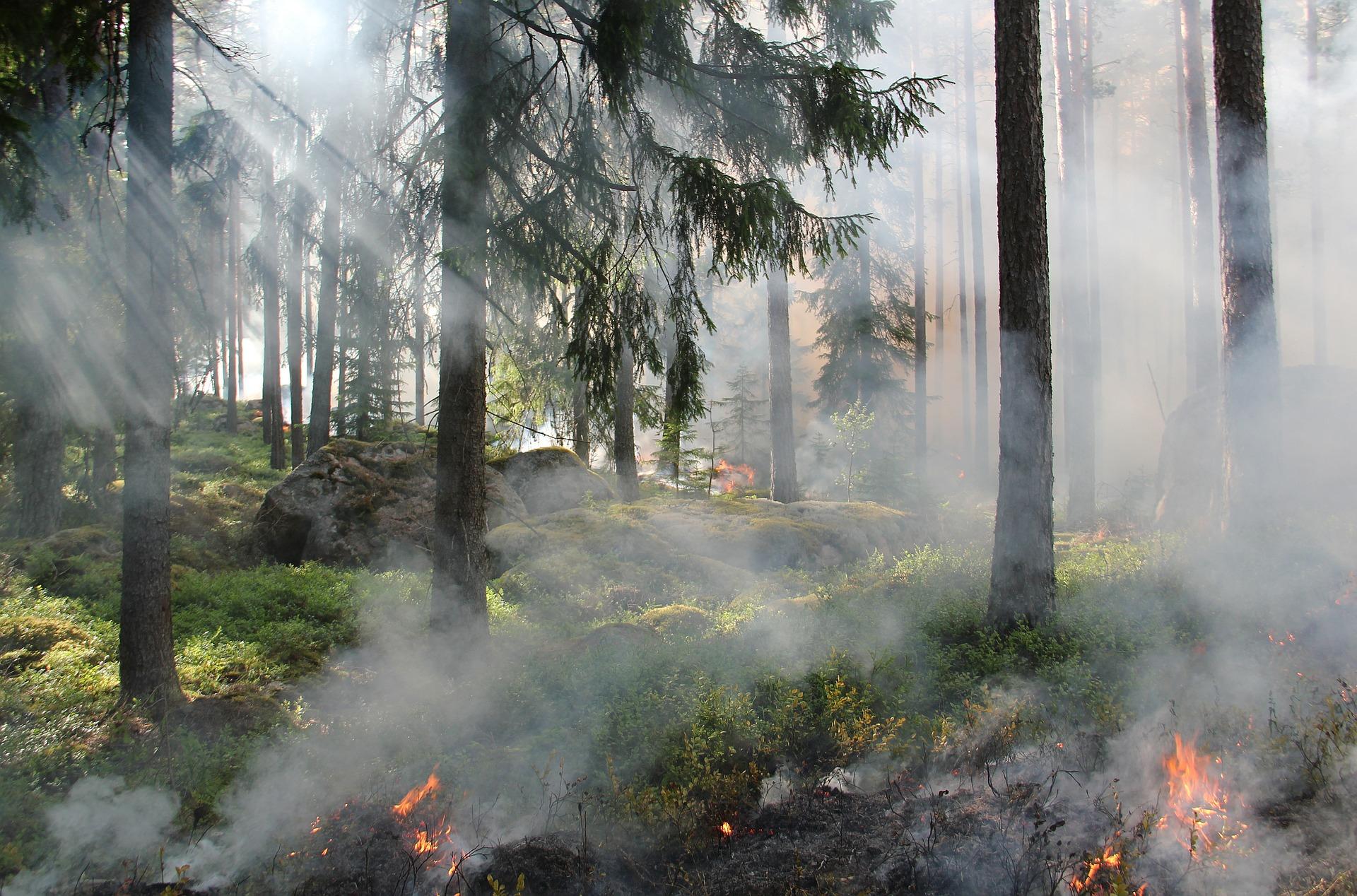 Prévention des feux de forêt – Un devoir et une obligation