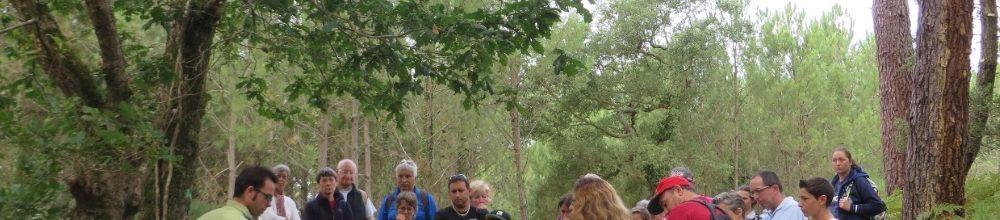 Visite guidée Nature : la forêt