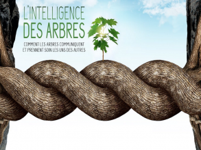 Projection du film : L'intelligence des arbres